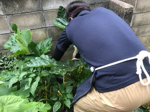 収穫1|岡崎市