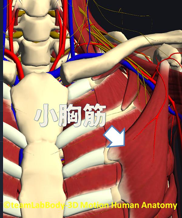 小胸筋症候群|岡崎市
