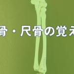 【図説】理学療法士が教える橈骨・尺骨の覚え方