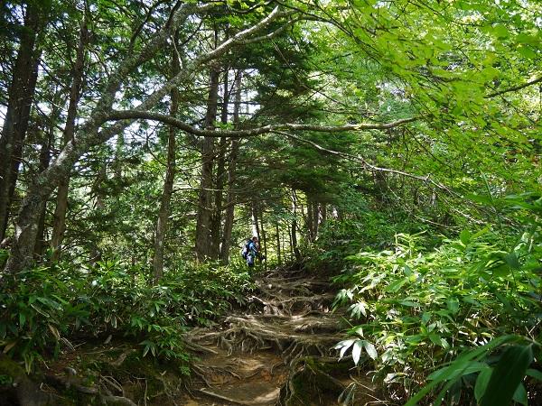 燕岳登山道2