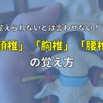 もう覚えられないと言わせない!頚椎・胸椎・腰椎の解剖学の勉強法
