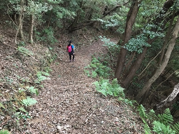 森を歩きます 2