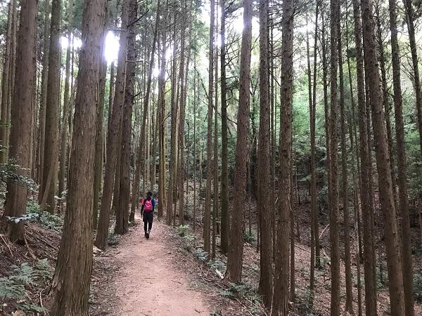森を歩きます2