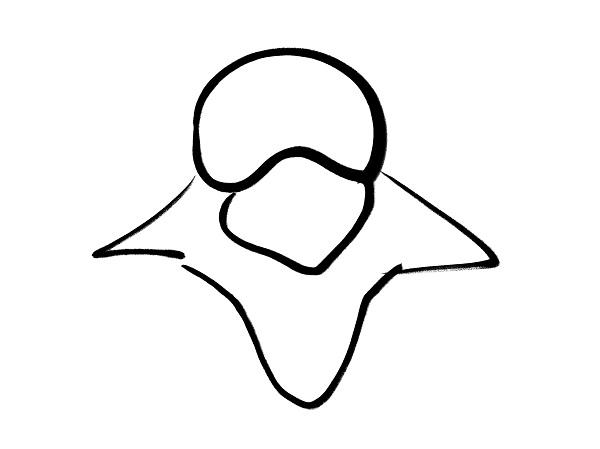 腰椎(上から)
