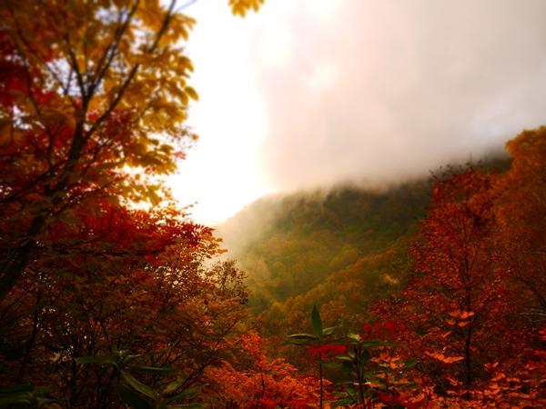 夕日と紅葉