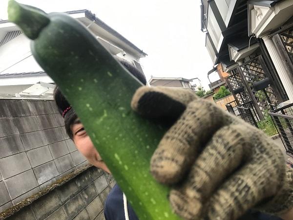 収獲5|岡崎市