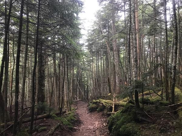 朝登山2|岡崎市
