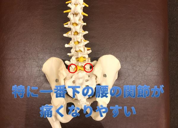 下位腰椎に痛みが出やすい|岡崎市