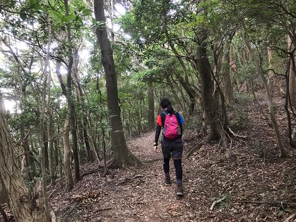 森を歩きます4