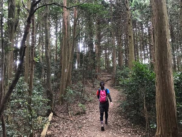 森を歩きます3