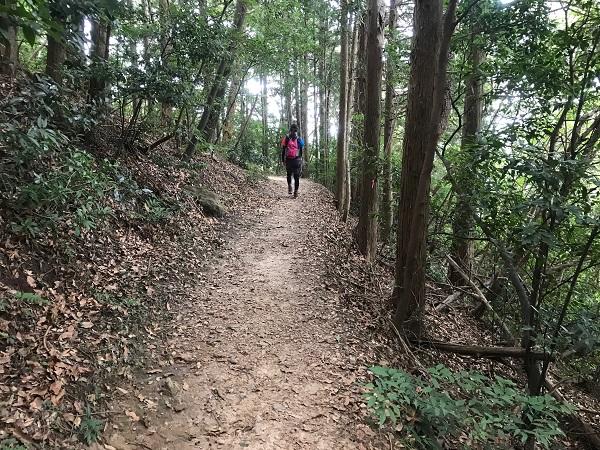 森を歩きます1