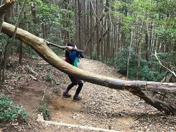 木を持ち上げる!