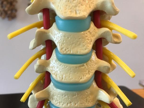 3-6頚椎写真