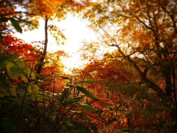 夕日と紅葉がきれい
