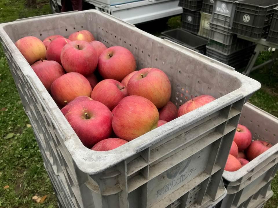 大量のりんご