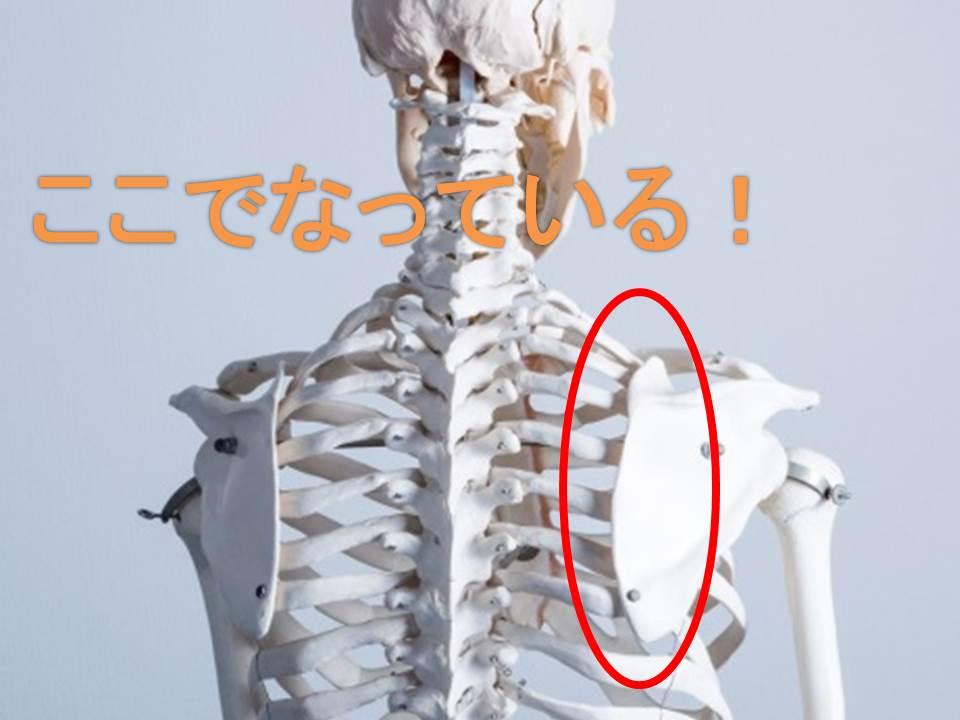 肩甲骨の音