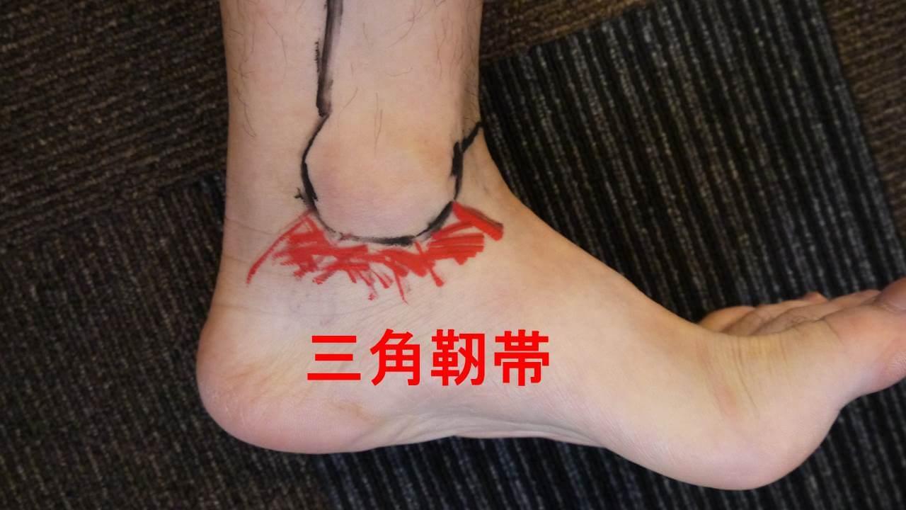 足首内側の靭帯