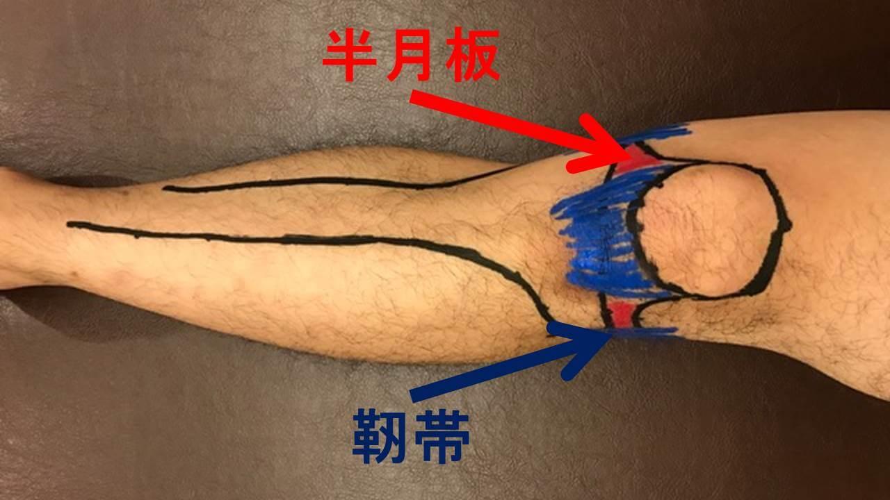 半月板・靭帯
