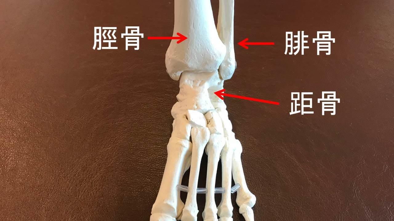 足関節の骨