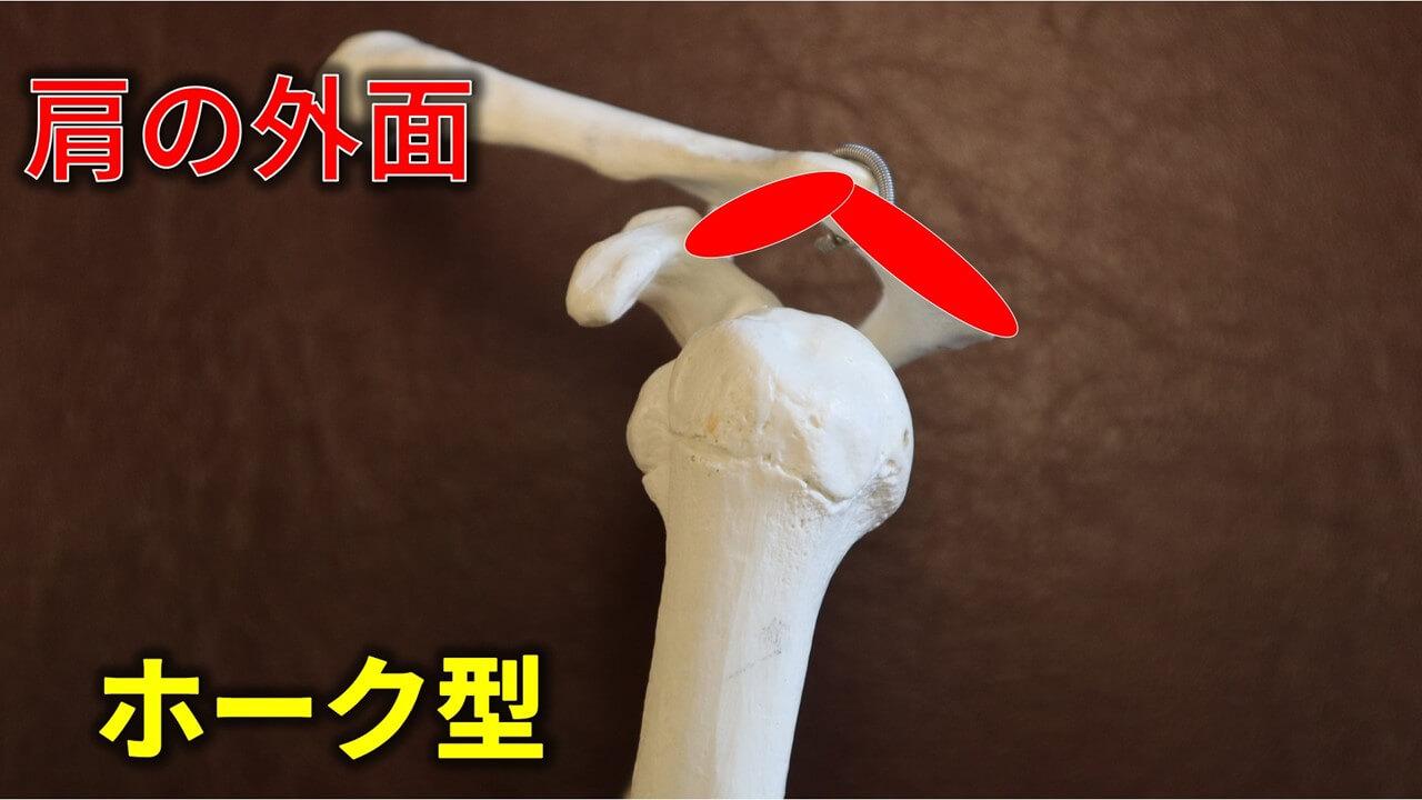 肩峰のホーク型