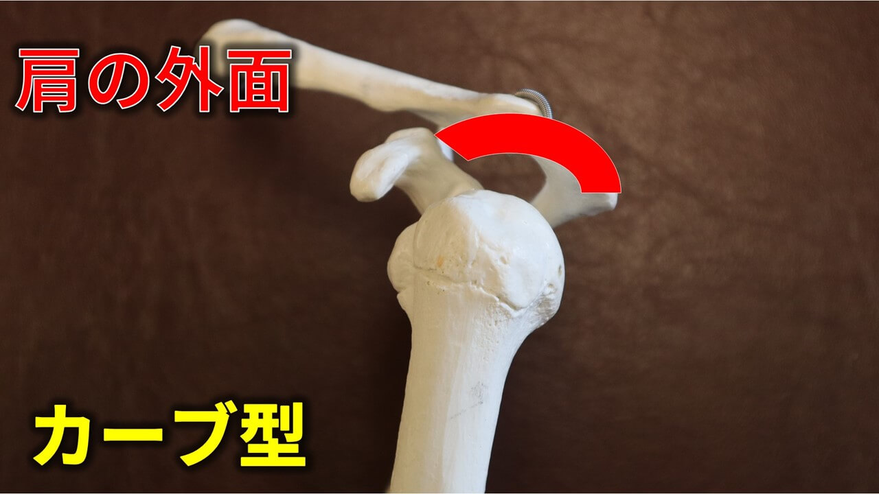肩峰のカーブ型