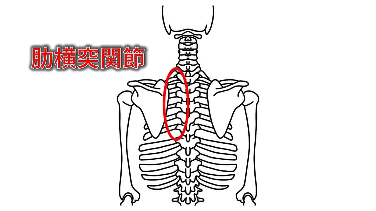 肋横突関節