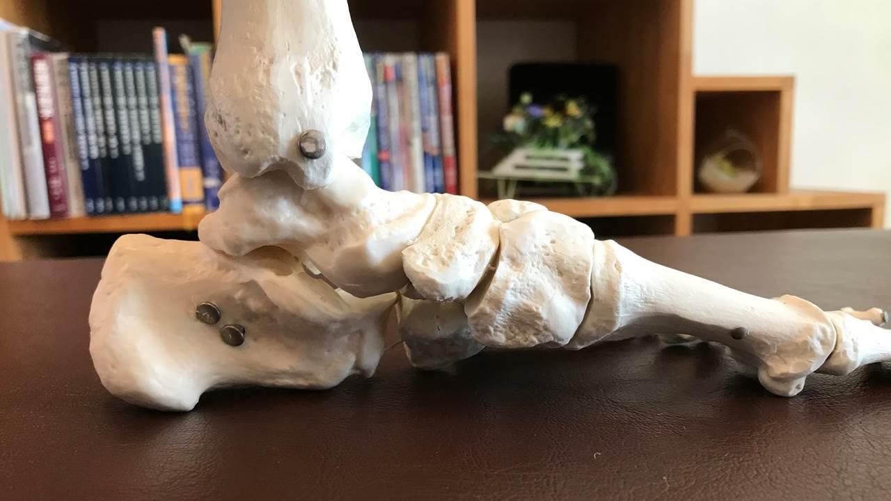 通常の足の骨