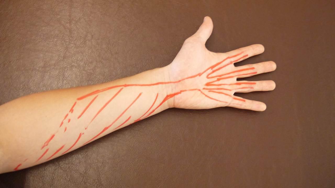 手からくる指の筋肉