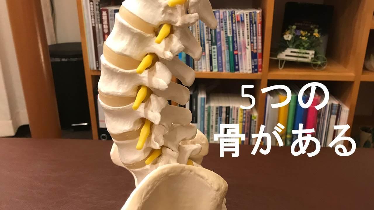 5つの腰骨