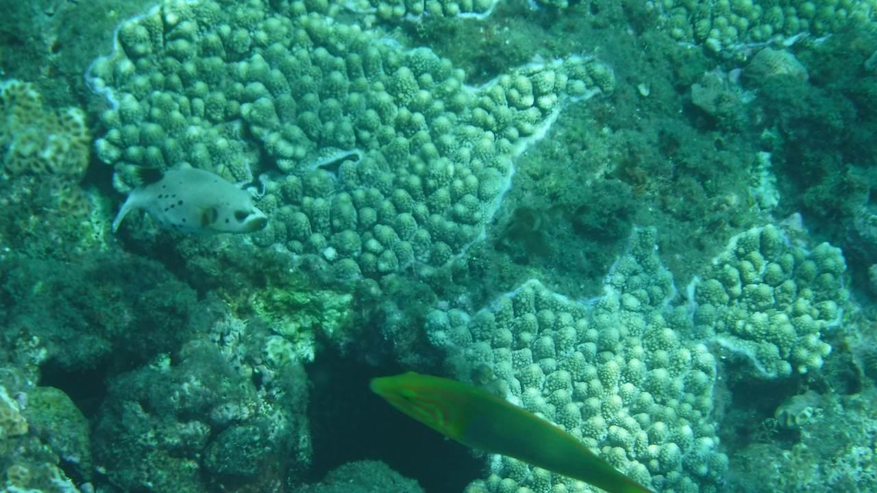 珊瑚とお魚