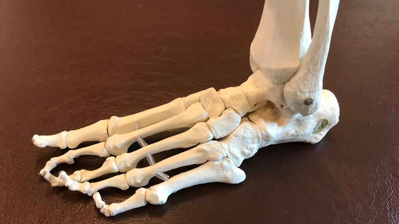 前足部の骨