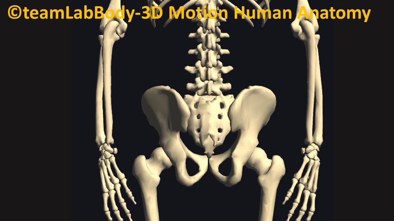 腰椎と股関節