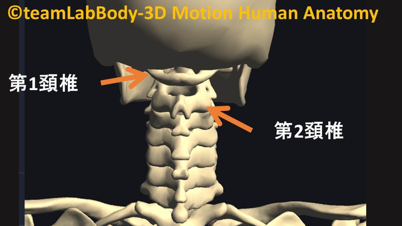 第1頚椎と第2頚椎
