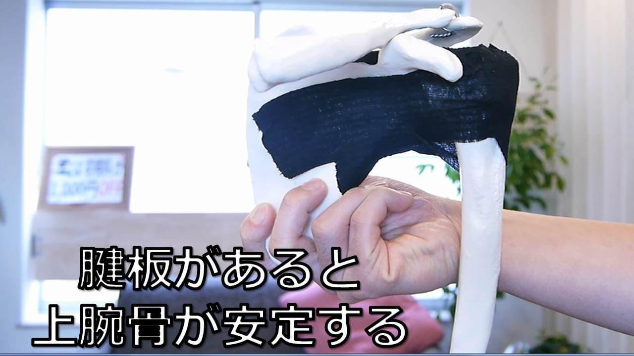 腱板で上腕骨が安定する