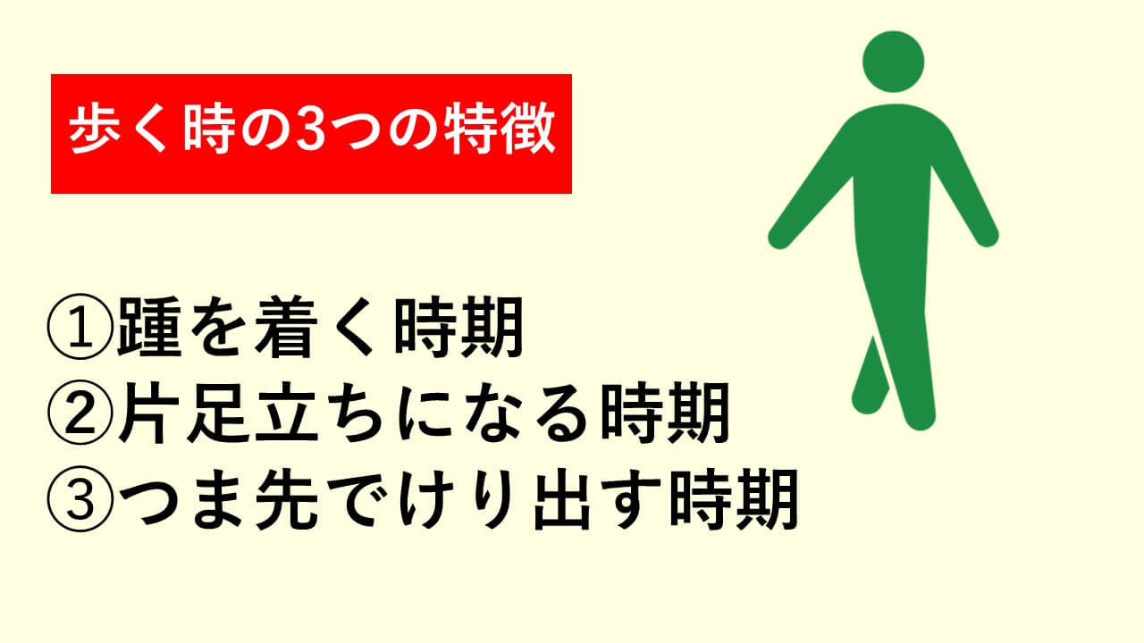 歩く時の特徴➀踵を着く時期➁片足立ちになる時期③つま先でけり出す時期
